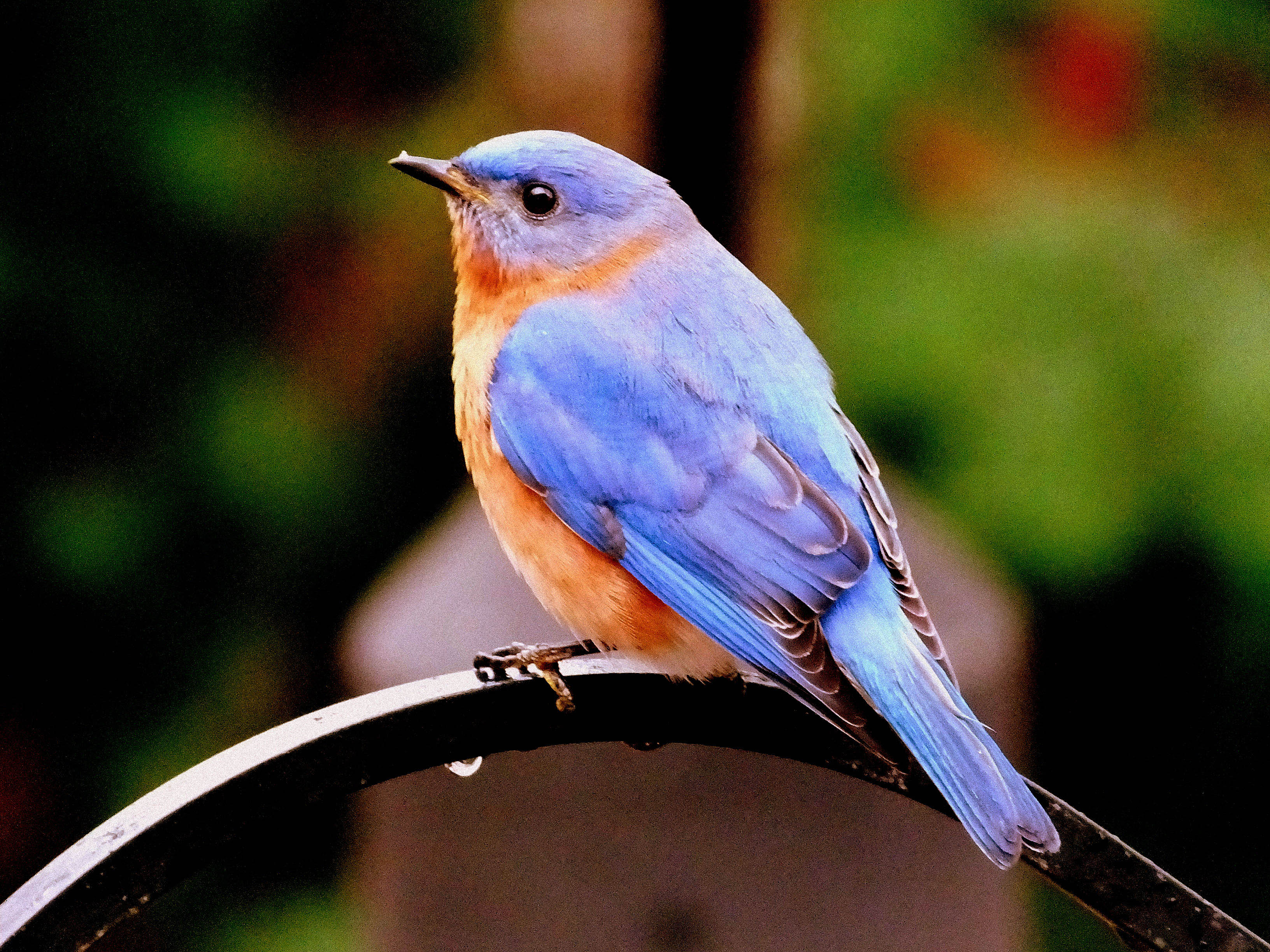 birds_parsons_gw_02jpg