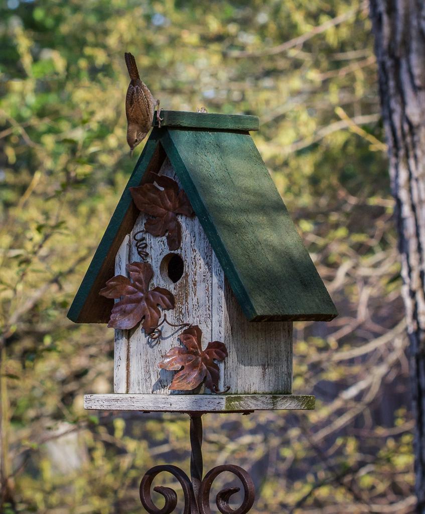 birds_prosser_ll_1