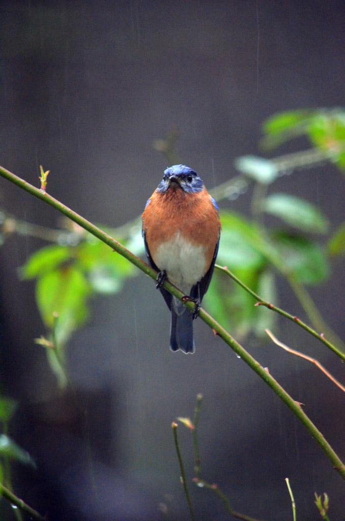 birdscostellonl02