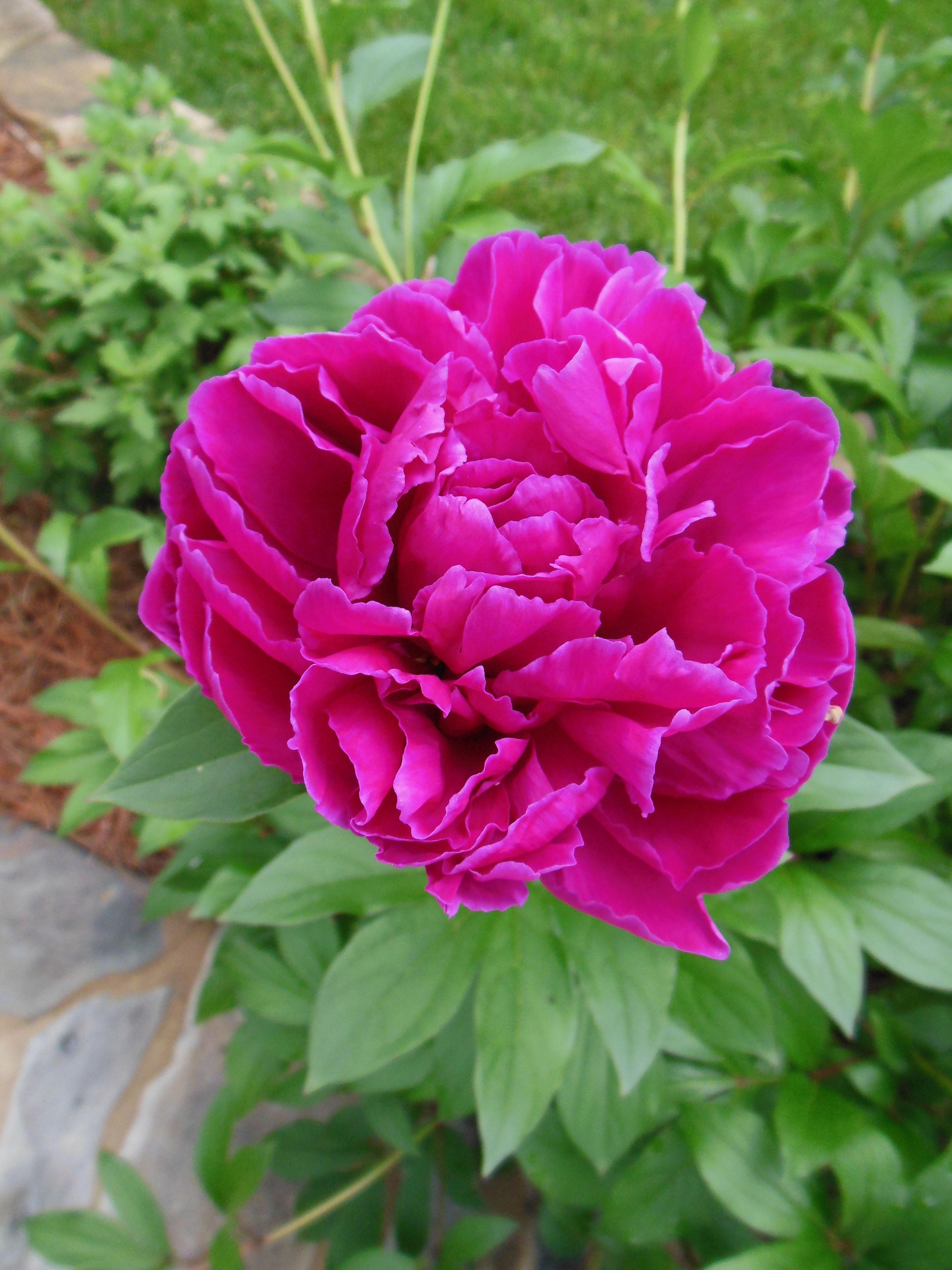 plant_anderson_mla_1