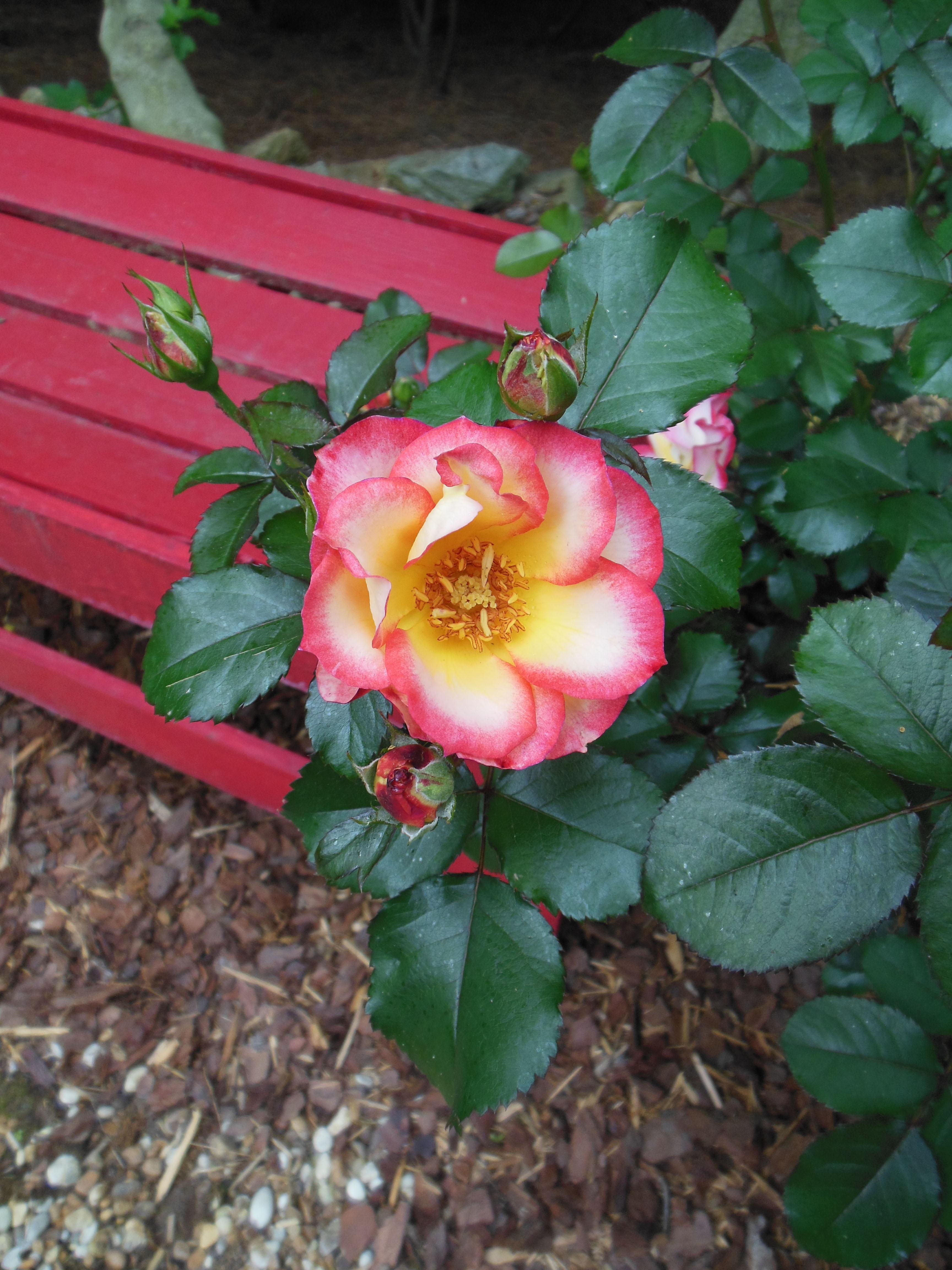 plant_anderson_mla_2